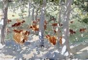 Highland Cattle in a Glade, Mull, Scotland