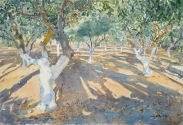 Olive and Pistachio Orchard, Evening